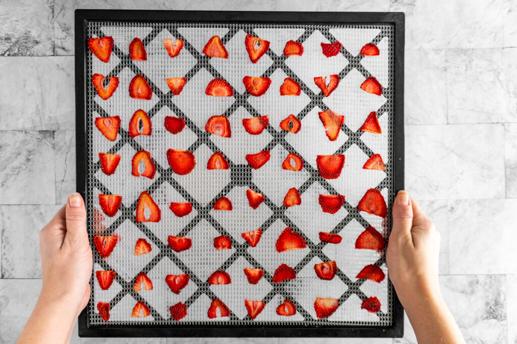 A tray of dehydrated strawberries coming out of the dehydrator.